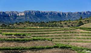 enoturisme_priorat_-_excursions_priorat